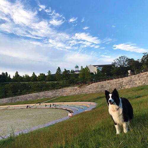 犬と秋の空