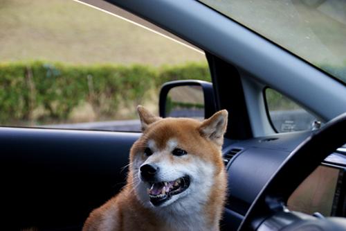 車でおでかけ