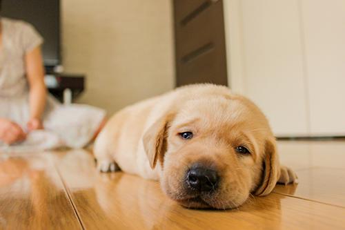 ストレスが溜まる犬