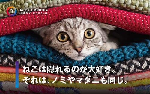 ブラベクトスポット猫用