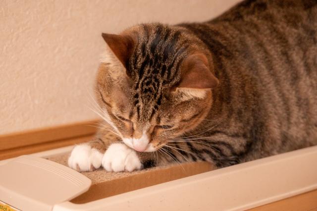 ネコの爪とぎ