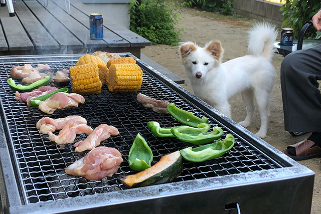 犬とバーベキュー
